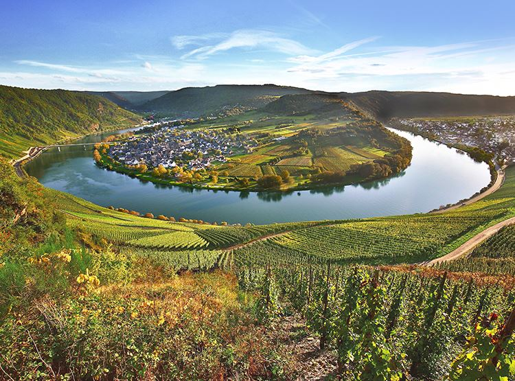 Vineyards_Rhine_Moselle